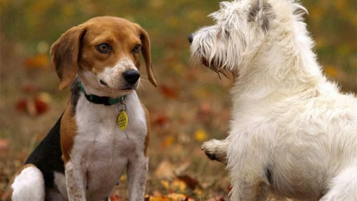 Adopt A Senior Dog Sa