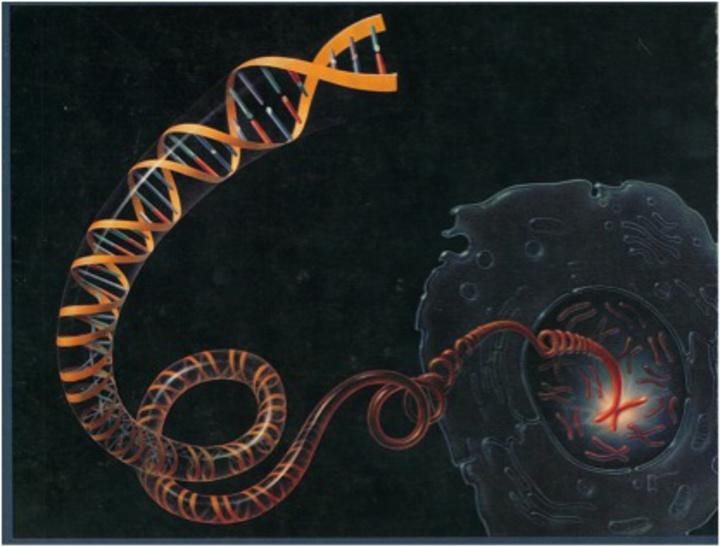 Στην εικόνα αυτή απεικονίζεται η διπλή έλικα του DNA  που κρύβει  τα μυστικά όλων των παθήσεων. Όταν όλα αυτά τα μυστικά αποκαλυφθούν και αρχίσουν οι γονιδιακές θεραπείες τότε δεν θα υπάρχει η ανάγκη της πρόληψης των καρδιαγγειακών παθήσεων.  Και τούτο γιατί  απλούστατα δεν θα υπάρχουν οι παθήσεις
